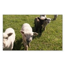 Friendly Lambs Decal