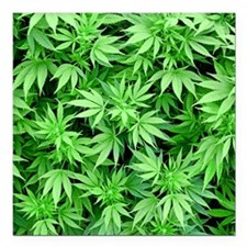 "Marijuana Square Car Magnet 3"" x 3"""