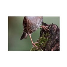 Dunnock perched on broken tree st Rectangle Magnet