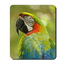 Green macaw parrot on green background. Mousepad