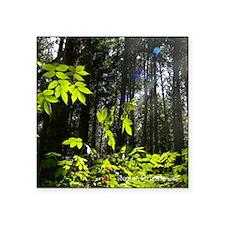 "Deep Woods Trail Square Sticker 3"" x 3"""