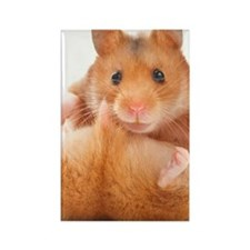 Funny Hamster Rectangle Magnet