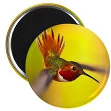 World of Hummingbirds .com - January Magnet