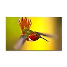 World of Hummingbirds .com -  Rectangle Car Magnet