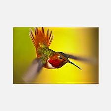 World of Hummingbirds .com - Janu Rectangle Magnet