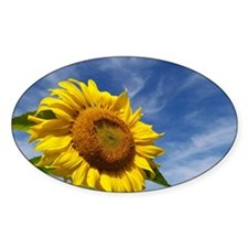 Sunflower Reaching for the Sky Decal
