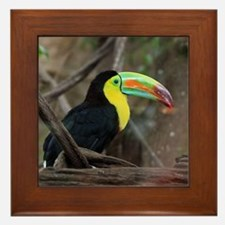 Keel-Billed Toucan Framed Tile