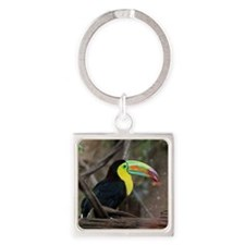 Keel-Billed Toucan Square Keychain