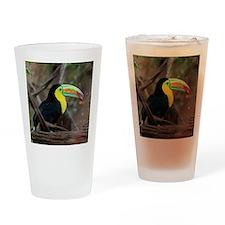 Keel-Billed Toucan Drinking Glass