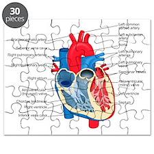 Heart Diagram Puzzle