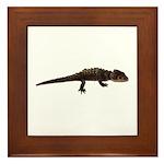 Red Eye Crocodile Skink Framed Tile