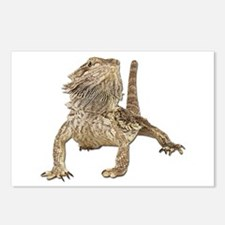 Bearded Dragon Photo Postcards (Package of 8)