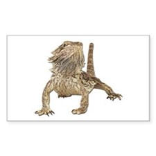 Bearded Dragon Photo Rectangle Decal