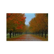 Dreamy Fall New England Drive Rectangle Magnet