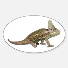 Chameleon Photo Oval Decal