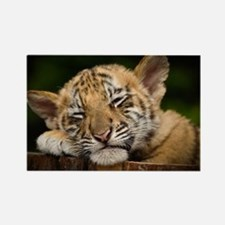 Siberian Tiger Cub Rectangle Magnet