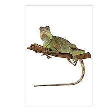 Iguana Photo Postcards (Package of 8)