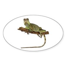 Iguana Photo Oval Decal