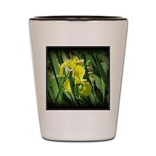 Iris9 Shot Glass