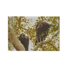 Black Vultures Rectangle Magnet