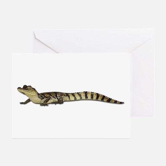 Alligator Photo Greeting Cards (Pk of 10)