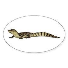 Alligator Photo Oval Decal