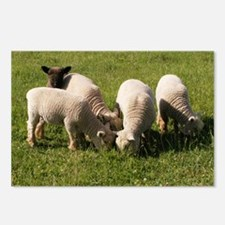 Ewe-niquely Me! Postcards (Package of 8)