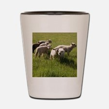 Happy Lambs Shot Glass