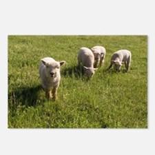 Friendly Lamb Postcards (Package of 8)