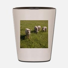 Friendly Lamb Shot Glass