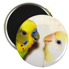 PARAKEETS LOOK OF LOVE Magnet