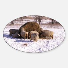 Ewes Very Fluffy! Decal