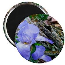 The Iris Magnet