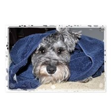 Wolfie after his bath Postcards (Package of 8)