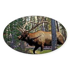 Bull elk in pines 5 Decal