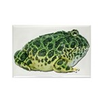 Pacman Frog Photo Rectangle Magnet