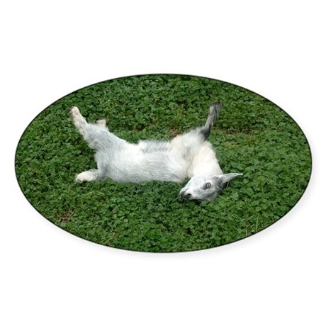 Fainting Goat Sticker Oval By ADMIN CP55151541