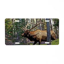 Bull elk in pines 6 Aluminum License Plate