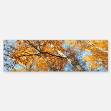 Fall Color Leaves Bumper Bumper Sticker