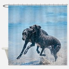 Scottish Deerhounds At The Beach Shower Curtain