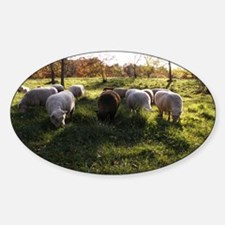 Grazing at Sunset Decal