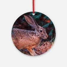 Blacktailed Jackrabbit Round Ornament