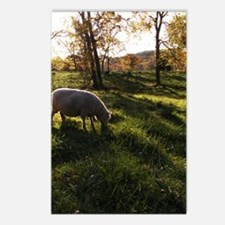 Long Shadows Postcards (Package of 8)