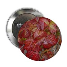 "Red Poison Oak Leaves 2.25"" Button"
