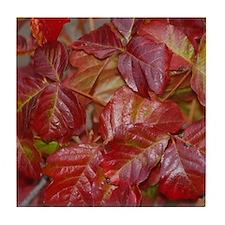 Red Poison Oak Leaves Tile Coaster