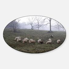 Misty Morning Sticker (Oval)