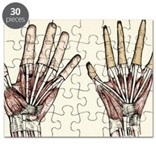 Human and ape hands Puzzle
