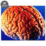 Human anatomy brain Puzzles