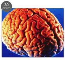 Human brain Puzzle