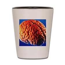 Human brain Shot Glass